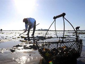Séquence de géographie: vivre, habiter, travailler, avoir des loisirs... sur le littoral (programme 2016)