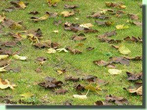 Conte d' automne pour petits curieux