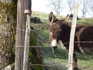 J'adore les ânes