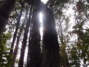 Que de fougères, de kauris et d'immenses arbres qui nous entouraient. Au fur et à mesure que nous avancions, la végétation changeait complètement!