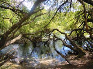 Près de notre camping se trouvait les Huka Falls, magnifiques cascades prenant leurs sources dans le lac Taupo. La couleur de l'eau est incroyable!! Nous avons pu suivre un sentier qui longe les falls et qui nous conduisit à Spa Road! Un endroit où une petite source d'eau très chaude se jette dans le Waikato. Rien de tel pour prendre un petit bain chaud!! Et nous pouvions choisir la température de notre bain grâce à ce mélange étonnant entre eau chaude et eau froide! C'est quand même quelque chose que l'on ne peut pas faire tout les jours surtout dans un endroit naturel et aussi beau!