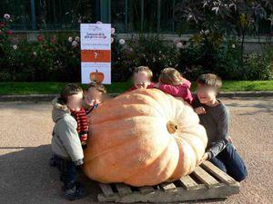 """Déco """"Halloween"""" du Parc avec une courge de plus de 200 kg !!!"""