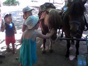 notre visite aux poneys