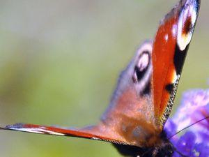 Les papillons en concert
