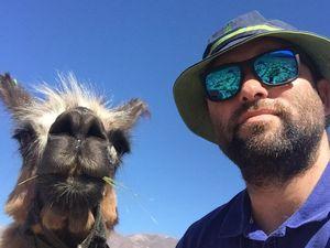 Nous ne regarderons plus les lamas de la même manière ....