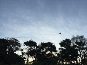 Faire du cerf-volant sur la plage de Sanur