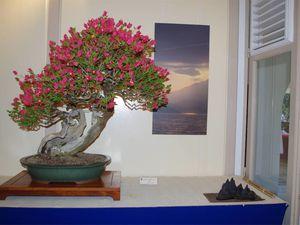 En 2ème position ex-aequo prix du public 2014, le ti-citron (Triphasia Trifolia), triple tronc (Sankan), 2006, à Huguette VENTADOUR et le bougainvillié (Bougainvillea spectabilis) penché-tronc écorché (Shakan-Sabamiki) 2002 à Alex BRAVO