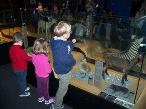 Sortie au Muséum d'Histoire Naturelle de Toulouse