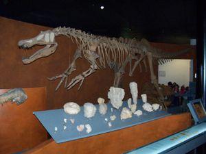 La tête du T-Rex a beaucoup impressionné les enfants!