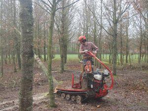 Les houpiers sont larges en plantation (un élagage des tiges d'avenir a été effectué en fin de chantier sur la partie forestière) et les branches s'emmêlent facilement en hauteur!