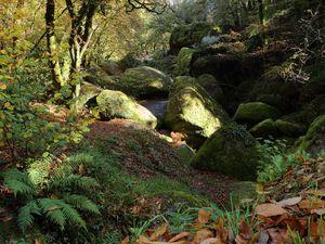 Couleurs d'automne en forêt de Huelgoat.