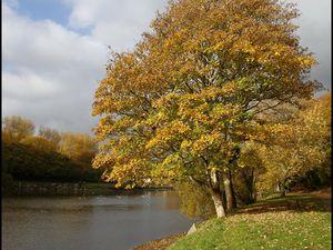 Couleurs d'automne sur les rives de la Penfeld...
