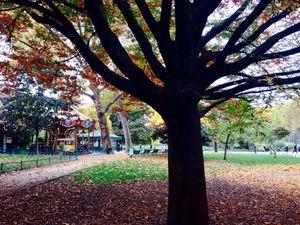 Charme et poésie d'un automne à Paris
