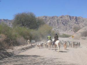 La suite de la ruta 40 avant d'atteindre San Carlos et de retrouver le confort§