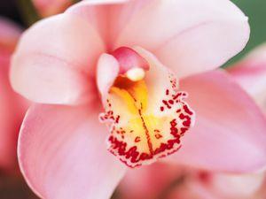 C'est pas la plus belle fleur du monde ???
