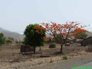 Ethiopie 1 - les hauts-plateaux et la dépression (du Danakil)