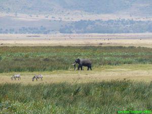 Pique-nique au bord d'un lac à hippo! Petits, Gros, Proies, Prédateurs, dans l'air, sur terre ou dans l'eau... le spectacle est partout!