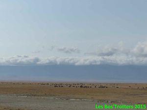Des troupeaux de gnous et des oiseaux solitaires!