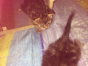 Deux chatons abandonnés sur le trottoir en pleine canicule