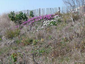 Sète, une flore locale préservée
