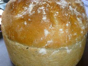 pain de campagne/céréales surprise