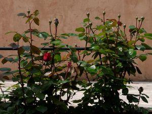 """L'eau de source sans quoi rien ne serait possible, les plantes vertes avant les chaleurs de l'été, et les rosiers qui vont """"exploser"""""""