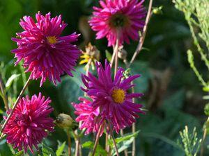Last Hope Gardenning : Prélude d'automne