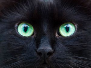 Les chats noirs, superstitions, légendes, expressions