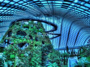 La Forêt Nuage = Cloud Forest