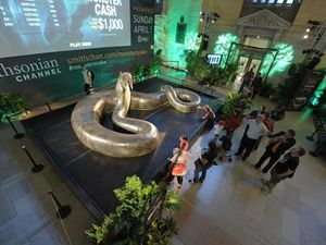Titanoboa, le plus grand serpent au monde, Epoque Paléocène.