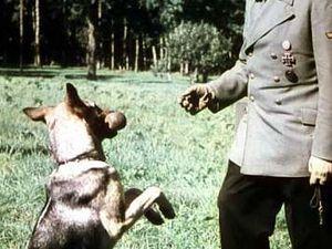 Blondie, le chien d'Hitler, Son Histoire