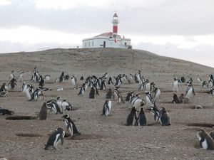 Le Monument naturel des pingouins, Magallanes, Sud du Chili