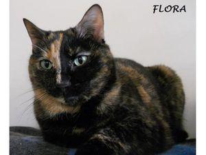 Flora chatte à adopter à Cergy-Pontoise