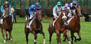 16 Octobre 2016  -  chantilly   C-3    PLAT