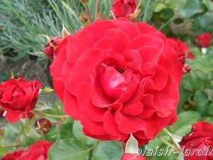b9. Les rosiers en E