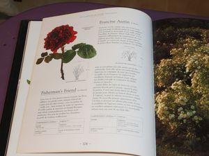 Livre &quot&#x3B;Les roses anglaises&quot&#x3B; de David Austin