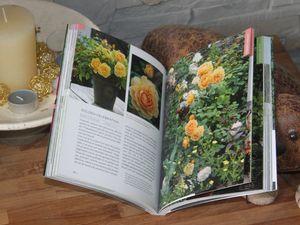 Livre: &quot&#x3B;Roses, les meilleures variétés pour petits jardins&quot&#x3B;