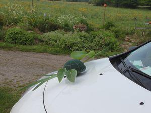 Une gerbe pour la voiture des mariés