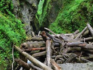 L'embâcle sur Oneonta Gorge - franchissement dangereux - photos Tripadvisor & Word of waterfalls