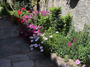 Jardin sarde (suite)
