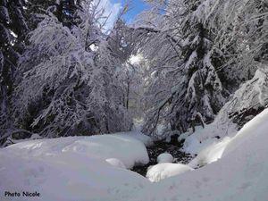 Plus haut une neige épaisse couvre les arbres.