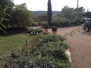 Zone de plantation des bulbes, derrière les Népétas et les Sauges.