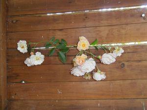 Merci aux seedlovers - Marie-Elisabeth du Morbihan