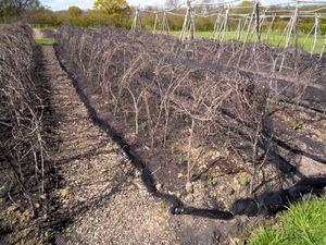 Le potager de Sissinghurst