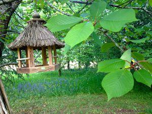 Secteur sud-est du jardin de Frescati : bugle rampant dans le sous-bois