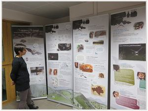 Saint André les Alpes : Les chauves-souris ont envahi la médiathèque