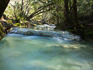 Les Cyanobactéries des sources de l'Huveaune