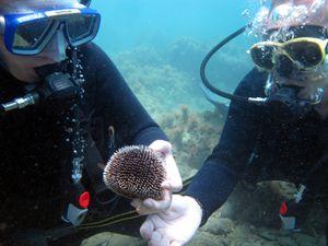 Rethymnon et plongée en Crète
