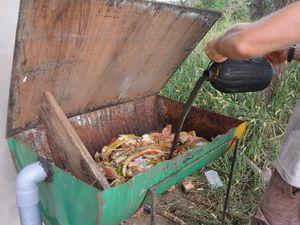 On ajoute du jus de larve pour attirer les mouches / We add some larvea juice to attract the flies
