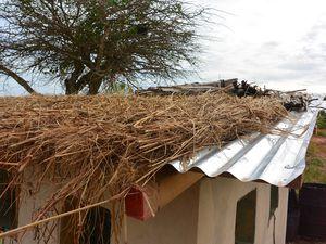Poulailler aéré avec du paillage pour faire baisser la chaleur / Ventilated chicken house with mulch to cool it down